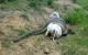 Serrinha: Agricultor encontra Sucuri devorando um bezerro