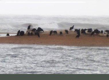 Mais uma baleia Jubarte é encontrada morta em praia de Prado