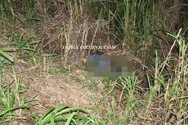 Ibirapitanga: Jovem desaparecida é encontrada morta em matagal