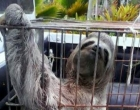 Animais silvestres são resgatados em Porto Seguro
