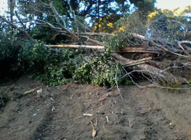 Itacaré: Denúncia acusa empreendimento imobiliário de cometer crimes ambientais