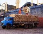 Produtores querem suspensão das importações de cacau e reclamam de processadoras