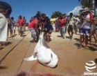Pescadores capturam e matam tubarão em praia de Santa Cruz Cabrália