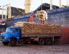 Retomada das exportações de cacau à Europa renova o ânimo dos produtores do Sul da Bahia
