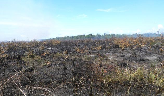 Maraú: Incêndio destrói restinga de mata atlântica na Região da Piracanga