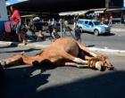 Carroceiro é preso por morte de cavalo em Vitória da Conquista