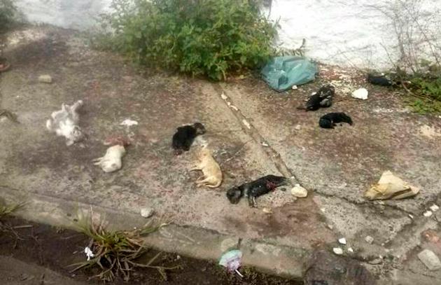 Filhotes de cães e gatos mortos jogados no aeroporto de Ilhéus