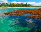 Guia Viagens elege praia de Taipus de Fora como a mais bonita do Brasil