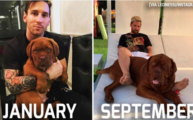 Cachorro 'gigante' de Messi chama atenção na web e vira meme