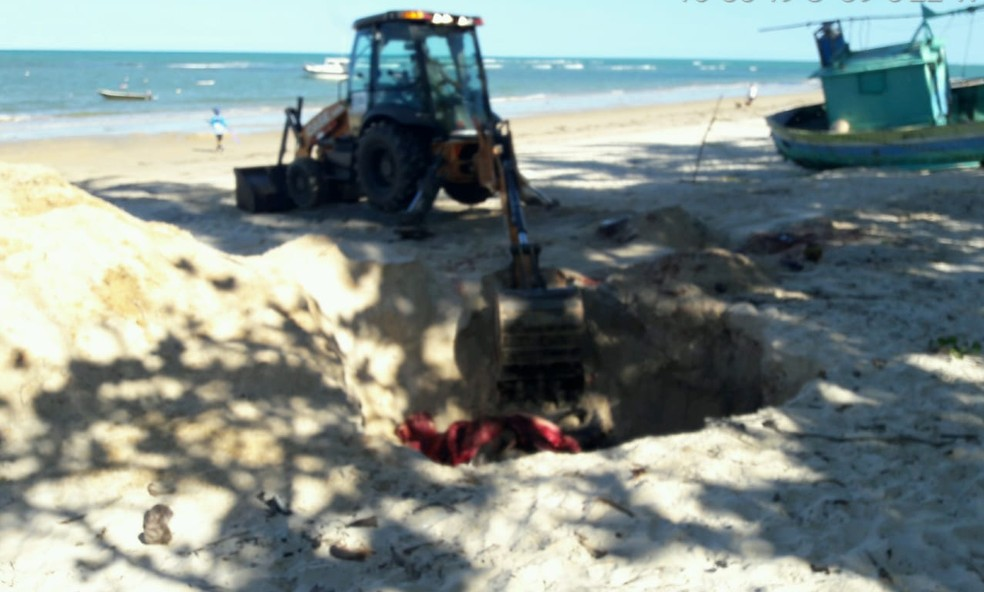 Filhote de baleia jubarte é encontrado morto no litoral de Porto Seguro