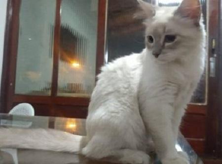 Gata no Mato Grosso é primeiro animal do Brasil infectado com Covid-19